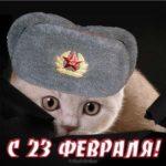 23 февраля открытка с кошкой скачать бесплатно на сайте otkrytkivsem.ru