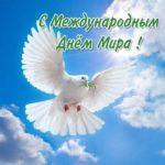 Бесплатная открытка с днем мира скачать бесплатно на сайте otkrytkivsem.ru