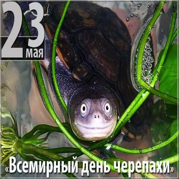 День черепахи открытка, именем