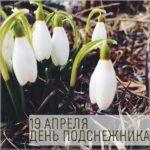 День подснежника 19 апреля картинка скачать бесплатно на сайте otkrytkivsem.ru
