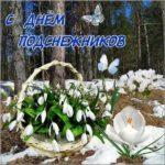День подснежника открытка скачать бесплатно на сайте otkrytkivsem.ru