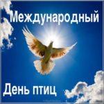 День птиц фото картинка скачать бесплатно на сайте otkrytkivsem.ru