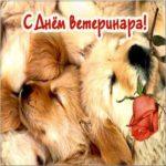 День ветеринарного врача картинка скачать бесплатно на сайте otkrytkivsem.ru