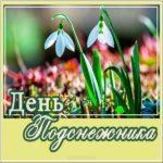 Картинка красивая с днем подснежника скачать бесплатно на сайте otkrytkivsem.ru