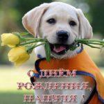 Картинка открытка с днем рождения папе скачать бесплатно на сайте otkrytkivsem.ru