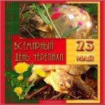 Картинка поздравление с днем черепахи скачать бесплатно на сайте otkrytkivsem.ru