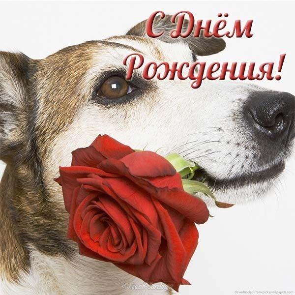 Креативная открытка с днем рождения девушке скачать бесплатно на сайте otkrytkivsem.ru