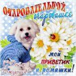 Милая открытка на день рождения скачать бесплатно на сайте otkrytkivsem.ru