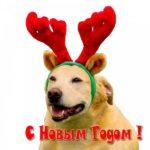 Новогоднее фото скачать бесплатно на сайте otkrytkivsem.ru