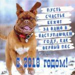Новогодний прикол фото 2018 скачать бесплатно на сайте otkrytkivsem.ru