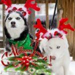 Оригинальная новогодняя бесплатная открытка скачать бесплатно на сайте otkrytkivsem.ru
