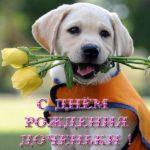 Открытка фото с днем рождения доченьки скачать бесплатно на сайте otkrytkivsem.ru