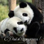 Открытка панда с днем рождения скачать бесплатно на сайте otkrytkivsem.ru