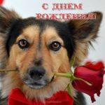 Открытка поздравление с днем рождения с собаками скачать бесплатно на сайте otkrytkivsem.ru