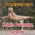 Открытка прикольная с днем рождения Алексей скачать бесплатно на сайте otkrytkivsem.ru