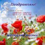 Открытка с 1 месяцем жизни скачать бесплатно на сайте otkrytkivsem.ru