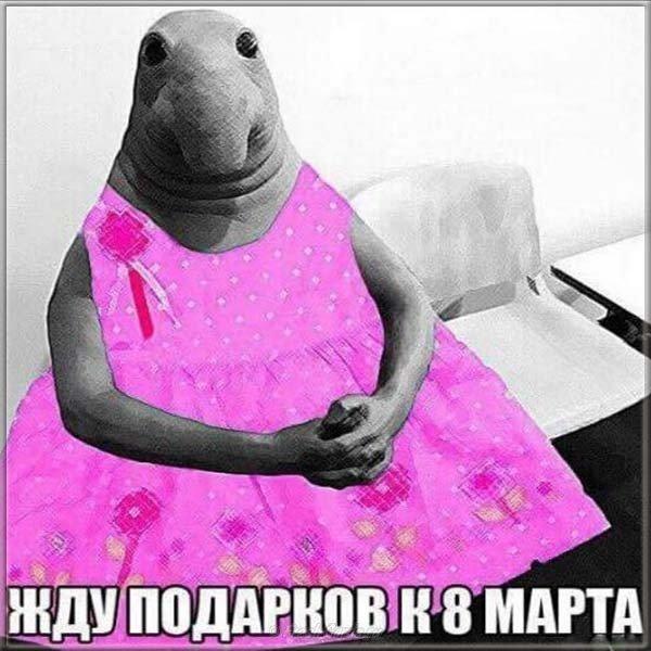 otkrytka s marta prikolnaya smeshnaya foto