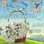 Открытка с днем подснежника скачать бесплатно на сайте otkrytkivsem.ru