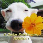 Открытка с днем рождения для Ирины прикольная скачать бесплатно на сайте otkrytkivsem.ru