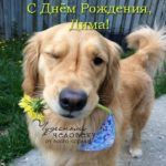 Открытка с днем рождения Дмитрий прикольная скачать бесплатно на сайте otkrytkivsem.ru