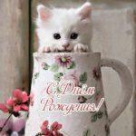Открытка с днем рождения кошки скачать бесплатно на сайте otkrytkivsem.ru