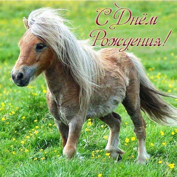 otkrytka s dnem rozhdeniya poni