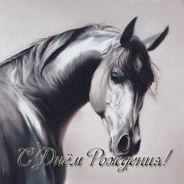 ик-портом красивые открытки с лошадью с днем рождения важно чтобы
