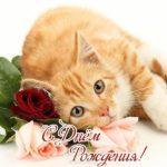 Открытка с днем рождения с котенком фото скачать бесплатно на сайте otkrytkivsem.ru