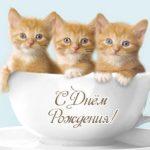 Открытка с днем рождения с котятами скачать бесплатно на сайте otkrytkivsem.ru