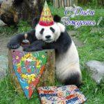 Открытка с днем рождения с пандой скачать бесплатно на сайте otkrytkivsem.ru