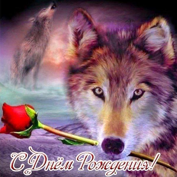 otkrytka s dnem rozhdeniya s volkom