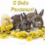 Открытка с днем рождения с зайкой скачать бесплатно на сайте otkrytkivsem.ru