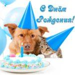 Открытка с днем рождения с животными скачать бесплатно на сайте otkrytkivsem.ru