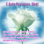Открытка с днем рождения шефу женщине скачать бесплатно на сайте otkrytkivsem.ru