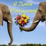 Открытка с днем рождения со слоном скачать бесплатно на сайте otkrytkivsem.ru