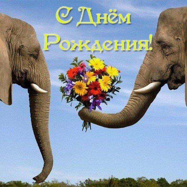 otkrytka s dnem rozhdeniya so slonom
