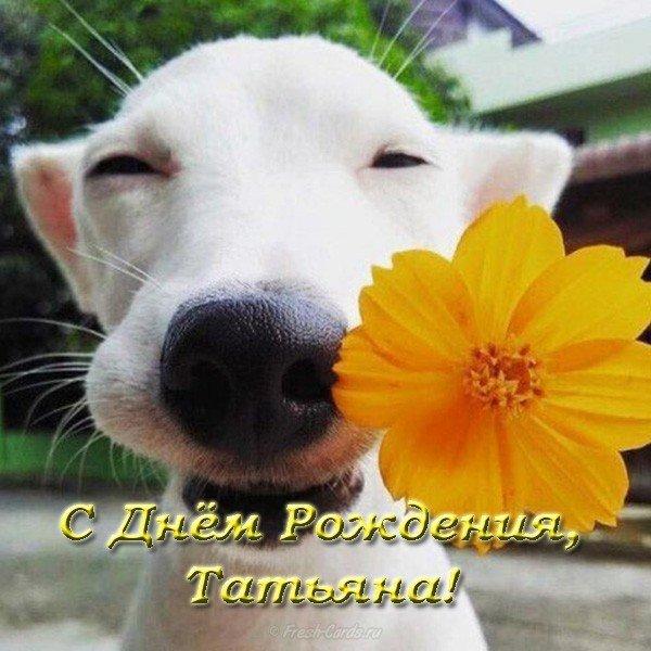 Открытка с днем рождения Татьяне прикольная скачать бесплатно на сайте otkrytkivsem.ru