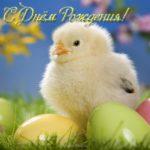 Открытка с днем рождения цыпленок скачать бесплатно на сайте otkrytkivsem.ru