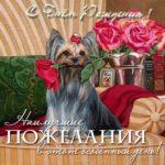 Открытка с днем рождения йорк скачать бесплатно на сайте otkrytkivsem.ru