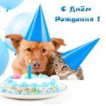 Открытка с днем рождения женщине с собачкой скачать бесплатно на сайте otkrytkivsem.ru