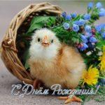 Открытка с днем рождения животные скачать бесплатно на сайте otkrytkivsem.ru