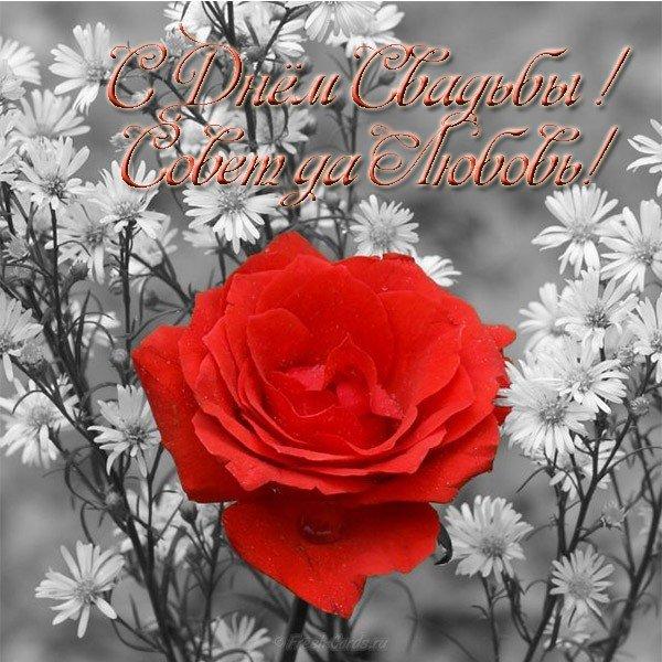 otkrytka s dnem svadby rozy