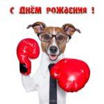 Открытка с днём рождения боксеру скачать бесплатно на сайте otkrytkivsem.ru