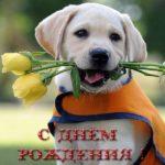 Открытка с днём рождения для детей скачать бесплатно на сайте otkrytkivsem.ru