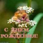 Открытка с днём рождения хомяк скачать бесплатно на сайте otkrytkivsem.ru