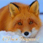 Открытка с днём рождения лиса скачать бесплатно на сайте otkrytkivsem.ru