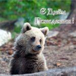Открытка с днём рождения медвежонок скачать бесплатно на сайте otkrytkivsem.ru