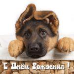 Открытка с днём рождения мужчине с собаками скачать бесплатно на сайте otkrytkivsem.ru