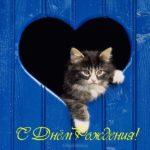 Открытка с днём рождения с котиками скачать бесплатно на сайте otkrytkivsem.ru