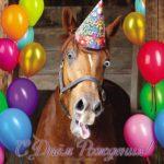 Открытка с днём рождения с лошадью скачать бесплатно на сайте otkrytkivsem.ru